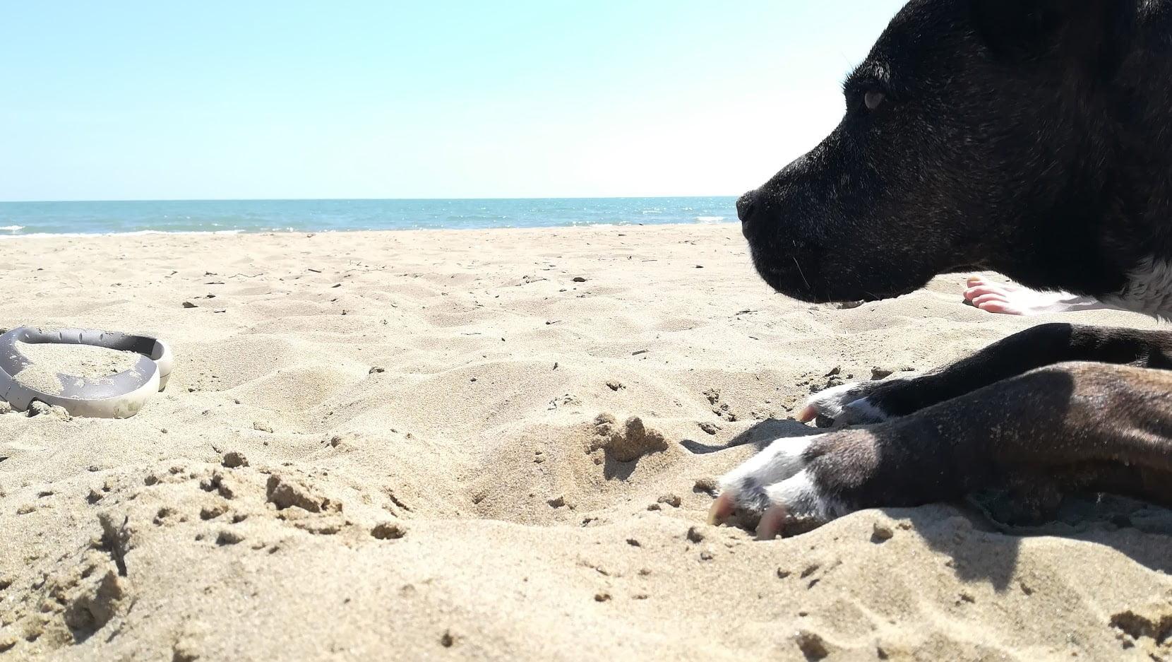 Sosta Libera in Camper in spiaggia a Ca' Savio VE